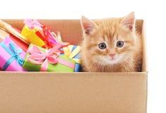 Wenig Katze im Kasten mit Geschenke lizenzfreie stockfotos