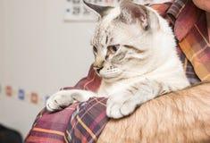 Wenig Katzenaufstellung Stockfoto
