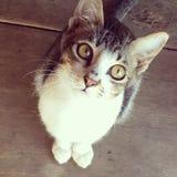 Wenig Katzenschauen Lizenzfreies Stockfoto
