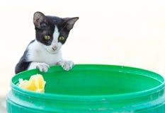 Wenig Katzestudieren Lizenzfreies Stockbild