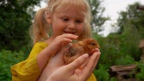 Wenig Mädchen, das ein kleines Huhn streicht stock footage
