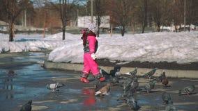 Wenig Mädchen, das im Frühjahr Tauben in einem Park jagt stock footage