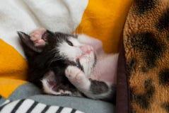Wenig Miezekatze, die auf dem Kissen schläft stockbild
