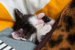 Wenig Miezekatze, die auf dem Kissen schläft lizenzfreie stockfotos