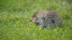 Wenig Miezekatze im grünen Gras stock video