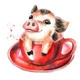 Wenig Minischwein der netten lustigen Teetasse in der roten Teeschale Gezeichnete Illustration des Aquarells Hand, lokalisiert au Lizenzfreie Stockfotografie