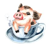 Wenig Minischwein der netten lustigen Teetasse in der Teeschale Gezeichnete Illustration des Aquarells Hand, lokalisiert auf weiß Stockbild