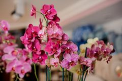Wenig nette rosa und weiße dekorative Blumen Stockbild