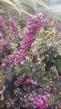 Wenig purpurrote Blume Lizenzfreies Stockbild
