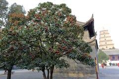 Wenig roter Obstbaum unter dayanta Turm, adobr rgb Stockfotos