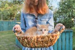 Wenig rotes Kätzchen im Korb, Mädchenholdingkorb, rustikale Art, goldene Stunde lizenzfreie stockbilder