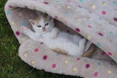 Wenig süße Miezekatze entspannte vollständig sich in einem Korb lizenzfreie stockfotos