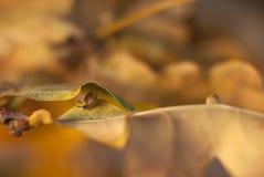 Wenig Schnecke versteckte sich in den gelb-braunen Blättern des Herbstes lizenzfreies stockbild
