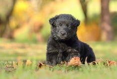 Wenig schwarzer Welpe im Garten lizenzfreie stockfotografie
