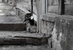 Wenig schwarzes Kätzchen, das allein nahe einem alten Holzhaus sitzt lizenzfreie stockfotos