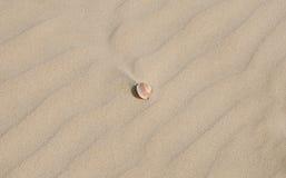 Wenig Seeshell auf hellem Sandhintergrund Lizenzfreies Stockbild