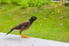 Wenig Singvogel im Park lizenzfreie stockfotografie