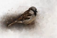 Wenig Spatz Aquarell-Digital-Malereiweinleseeffekt lizenzfreie stockfotos