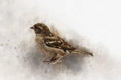 Wenig Spatz Aquarell-Digital-Malereiweinleseeffekt lizenzfreie abbildung