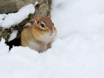 Wenig Streifenhörnchen im Schnee Stockfotografie
