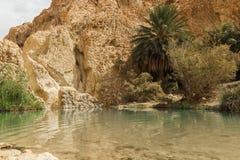 Wenig Teich in Chebika-Oase an der Grenze von Sahara, Tunesien, Afrika Stockfoto