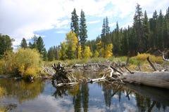 Wenig Truckee Fluss-Fall Lizenzfreie Stockfotografie