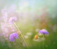 Wenig ungewöhnliche purpurrote Blume Lizenzfreie Stockfotografie