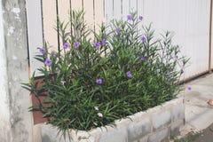 Wenig violette Blume Lizenzfreies Stockfoto