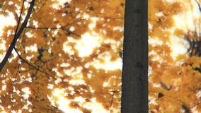 Wenig Vogel auf einem Baum im Herbstwald stock video