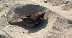 Wenig Vogelreinigung selbst stock video footage
