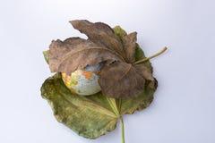 Wenig vorbildliche Kugel gesetzt zwischen zwei Herbstlaub Lizenzfreies Stockfoto
