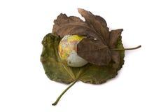 Wenig vorbildliche Kugel gesetzt zwischen zwei Herbstlaub Stockfotos
