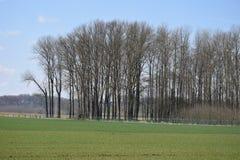 Wenig Wald lizenzfreies stockbild