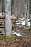 Wenig Wald nahe Grenchen Stockfoto