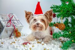 Wenig Welpe feiert neues Jahr stockfotos