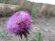 wenige Bienen auf einer Blume lizenzfreie stockfotos