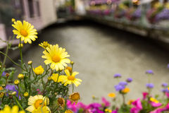 Wenige Blumen in Chamonix Lizenzfreies Stockbild