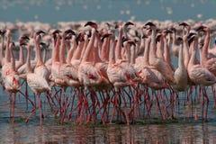 Wenige Flamingos Lizenzfreies Stockfoto