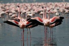 Wenige Flamingos Lizenzfreies Stockbild