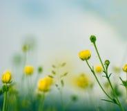 Wenige Gelbwiesenblumen und -himmel Stockbild