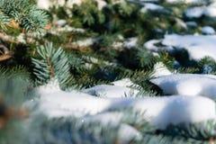 Wenige grüne Baumaste im weißen Schnee Stockbild