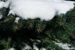 Wenige grüne Baumaste im weißen Schnee Lizenzfreie Stockfotografie