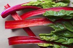 Wenige große Blätter des Rotes - aufgehaltenes Mangoldgemüse Stockfotografie