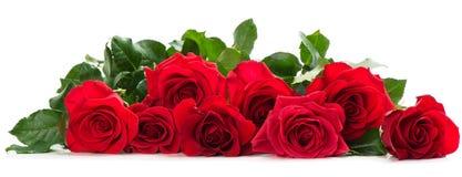 Wenige rote Rosen Lizenzfreies Stockfoto
