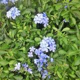 wenige Sommerblumen Lizenzfreies Stockfoto