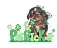 St Patrick Tageswelpe Lizenzfreie Stockfotos