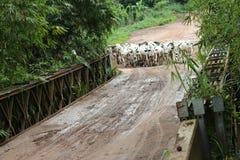 Weniger menschlich, mehr Vieh Lizenzfreie Stockfotos