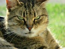 Wenn Aphrodite katzenartig waren Hübsche Katze im Sonnenschein Stockbild