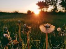 Wenn die Sonne untergeht stockfotografie
