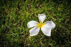 Wenn Schönheitstropfen vom Himmel in das Gras Stockfotos